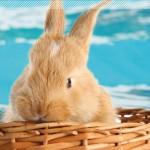 pâques à la piscine de Bolbec le 4 avril 2015